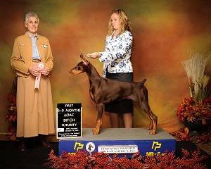 DPCA Futurity 1st in 6-9 AOAC Bitch- Marj Brooks