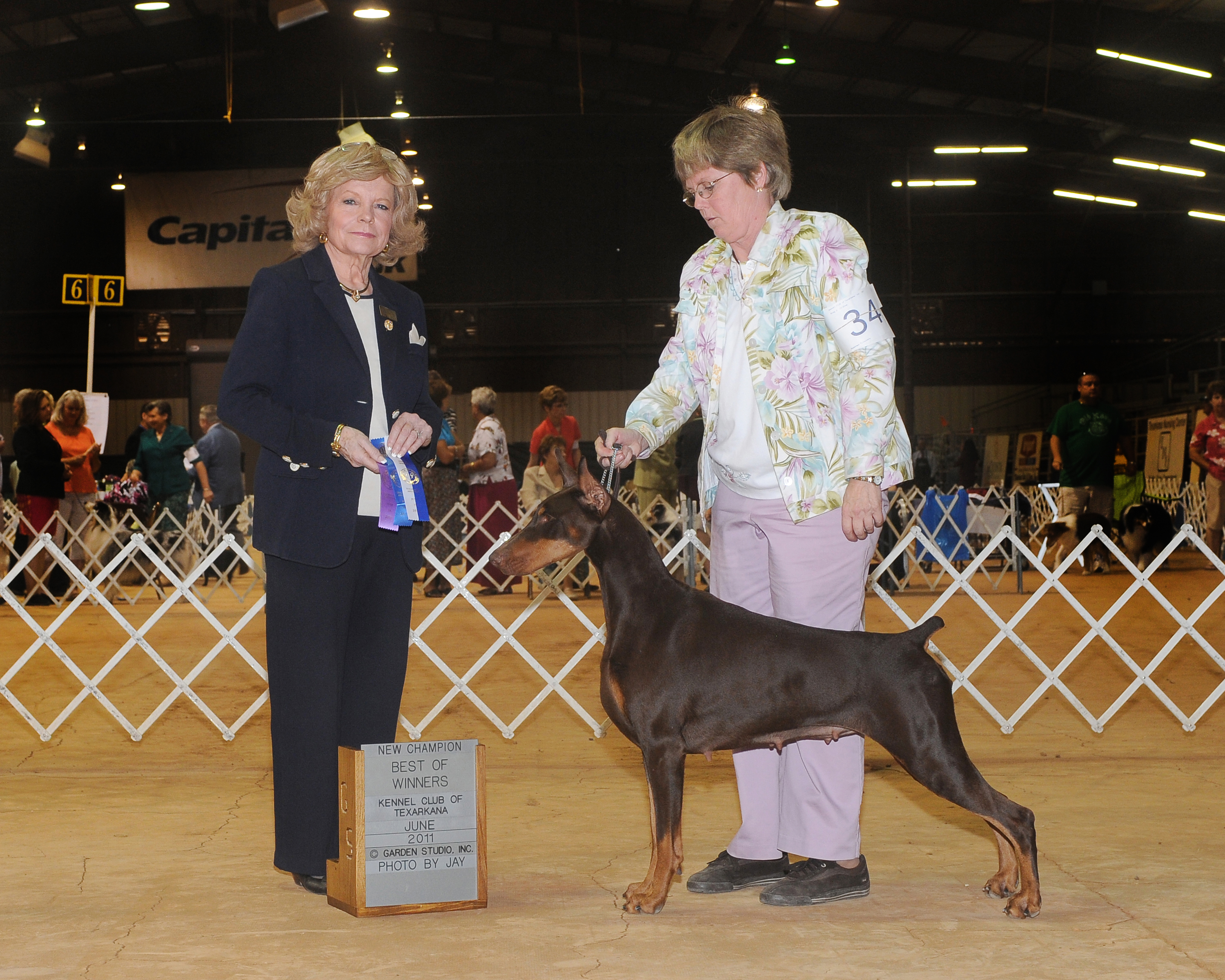 Smartie Major win New Am Ch Judith Goodin
