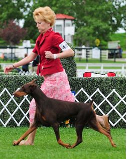 Smartie moving at 2011 AKC with Lori Gauvin