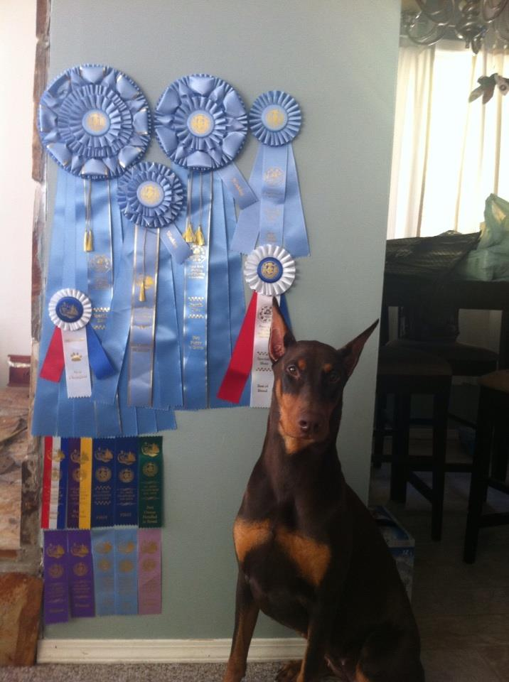Phoenix back home with all her ribbons Oct 2013